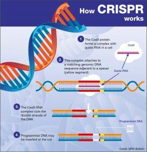 CRISPR:  A Transformation in Human Therapeutics